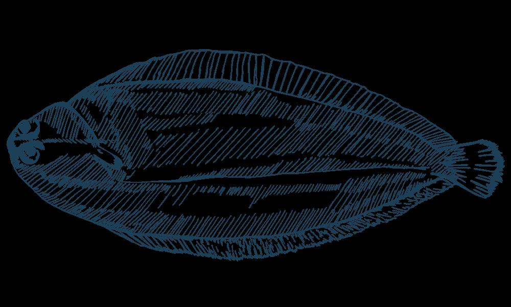 Pacific Sole Illustration, Maris Seafood