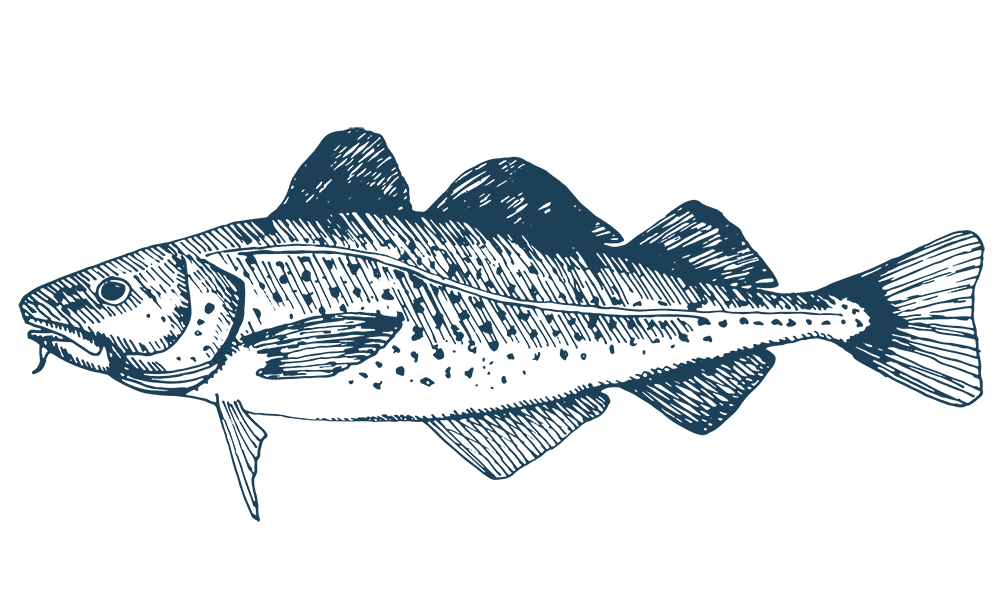 Atlantic Cod Wholesale, Maris Seafoods